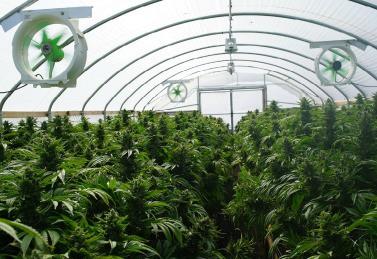 marijuana grow operations
